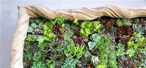 DIY Vertical Garden Lives and Breathes