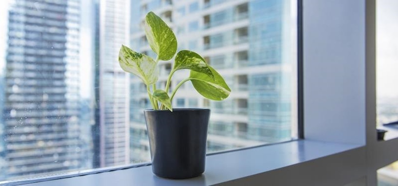 Having Just One Plant in Your Workspace Can Boost Your Overall Productivity