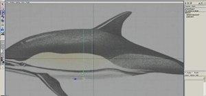 Model a dolphin in Maya