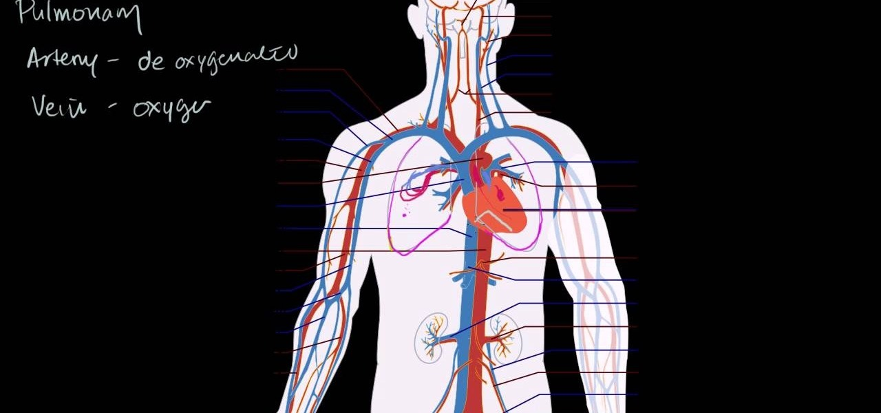 circulatory system project The circulatory system, also called the cardiovascular system or the vascular system, is an organ system that permits blood to circulate and transport nutrients (such.