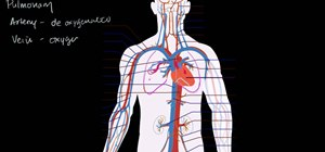 Understand the circulatory system & the heart