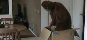 Prank your roommate who has ordered a new computer with a bigfoot costume