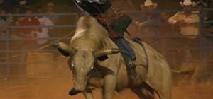 Ride a bull like a real cowboy