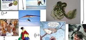 Human Birds