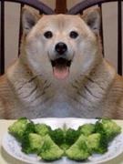 Fat Pupper