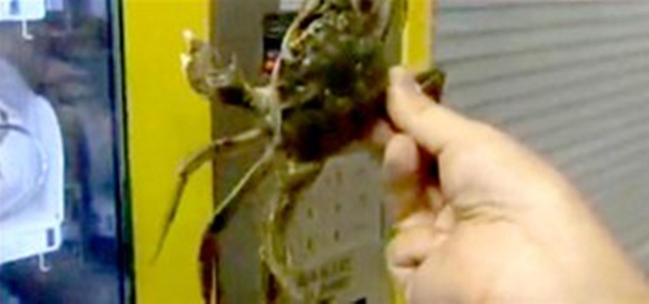 Claw Vending Machine Dispenses Live, Hibernating Crabs ...