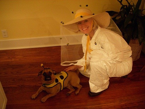 Ideas For Homemade Halloween Costumes For Dogs Halloween Costume Ideas