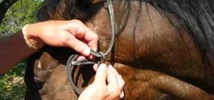 Tie a halter knot in horseback riding