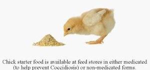 Raise baby chicks