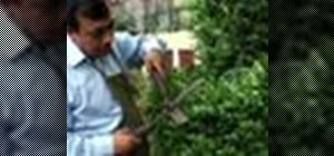 Make hedge trimming easier on yourself
