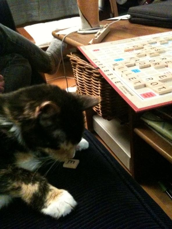 If Cats Could Play Scrabble...