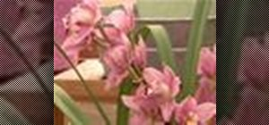 Care for orchids & ensure they last for years