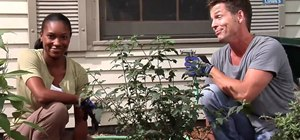 Plant new trees and shrubs on your landscape with advice from Lowe's