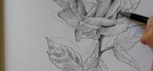 Draw a rose with a pencil