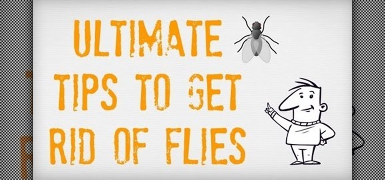 How to Get Rid House Flies
