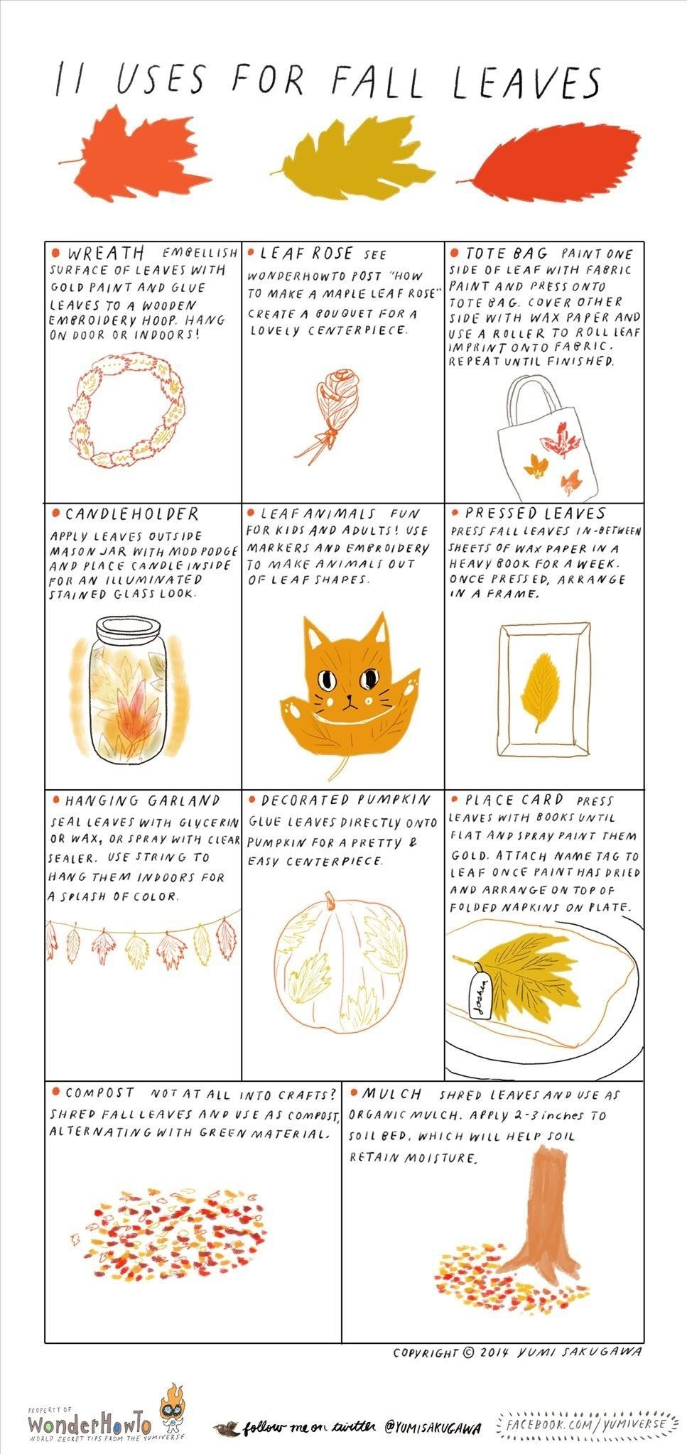 11 Crafty & Practical Uses for Colorful Fall Leaves