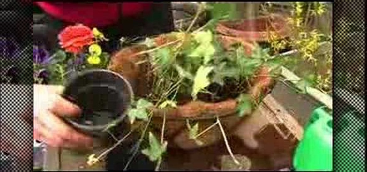 How To Make A Hanging Basket Flowers : How to make a hanging basket for your flowers ? flower