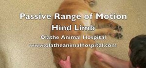 Perform passive range of motion (PROM) exercises on your dog's hind legs