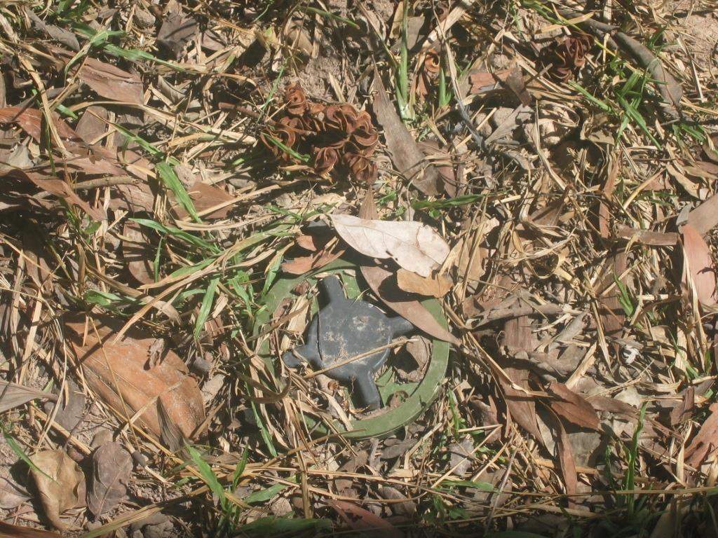Glowing Bacteria Can Help Locate Devastating Hidden Land Mines