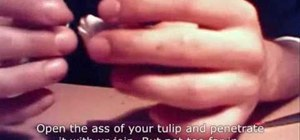Roll a marijuana tulip joint