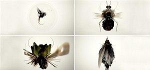 Photoshop Gives Birth to Biomechanical Bug