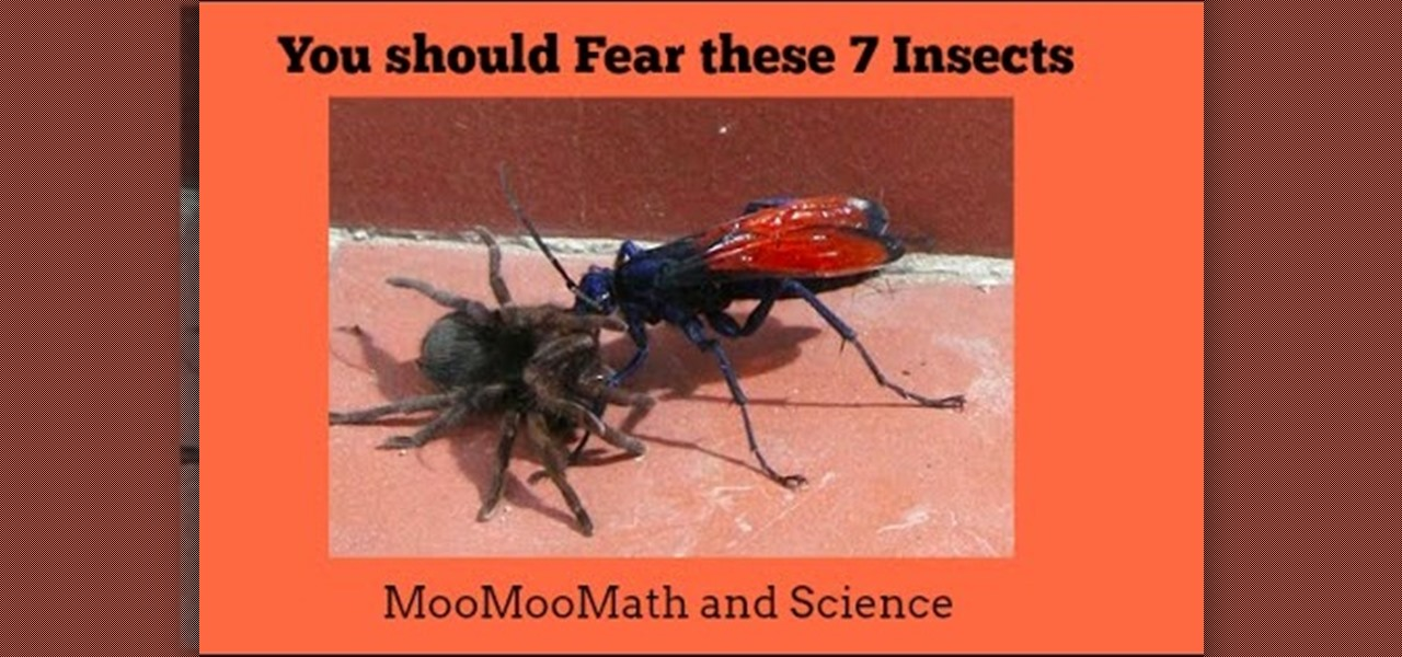 Can These Insects Kill You-7 Insects to Fear « Science
