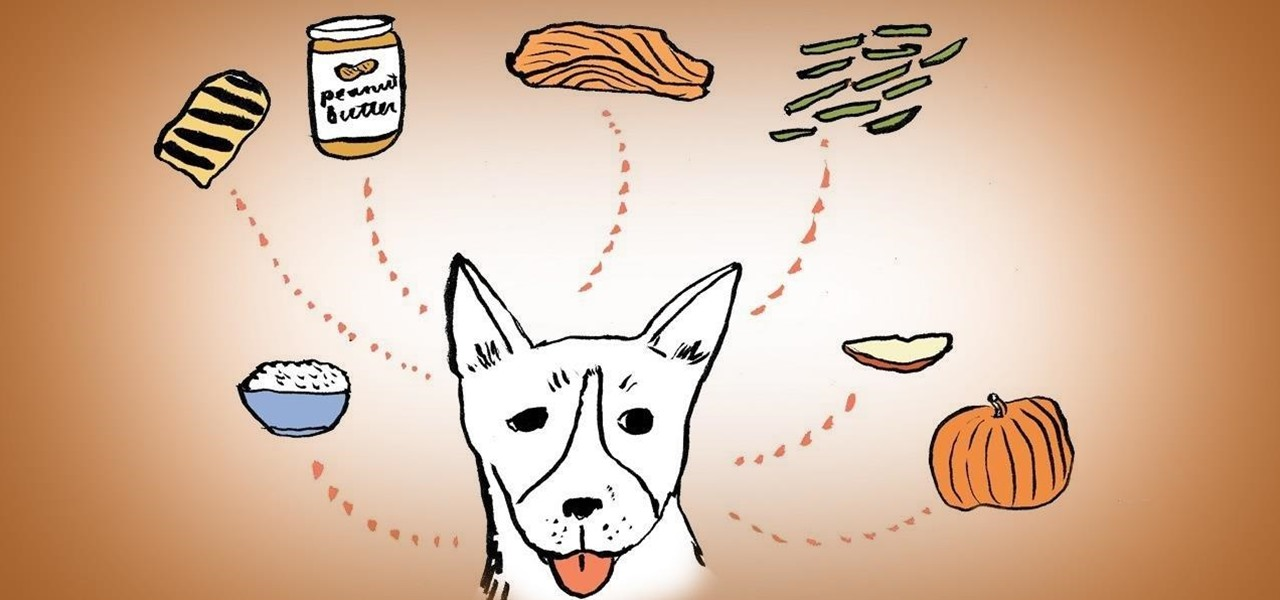 12 People Foods Your Dog Should Be Eating for a Healthy Diet