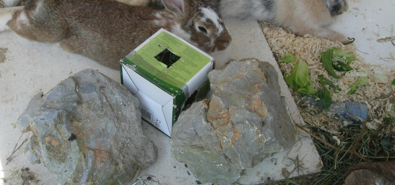 How to Earn Your Rabbits Trust advise
