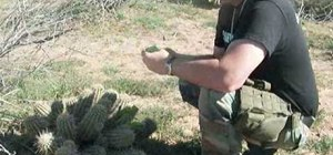 Eat & extract water from a cactus