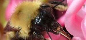 Extreme Close-up Photo Challenge: Bzzzzz