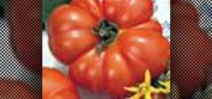 Grow tomatoes in grow bags and beds