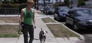 Train your dog to leash walk