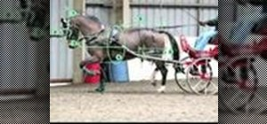 Meaure a harness for your horse and carriage