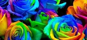 Grow Psychadelic Roses