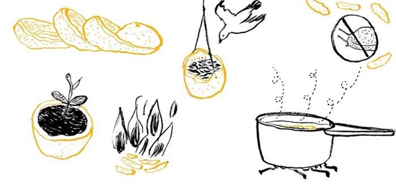 14 Amazing Uses for Orange Peels