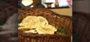 Make Indian naan bread
