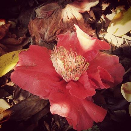 Filter Photography Challenge: Instagram Flowers