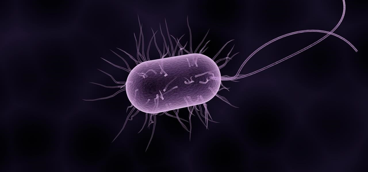 The Unusual Stomach-Survival Mechanisms of Ulcer-Causing Bacteria Could Be Its Achilles Heel