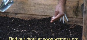 Sow seeds in a raised bed garden