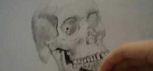 Draw a realistic skull