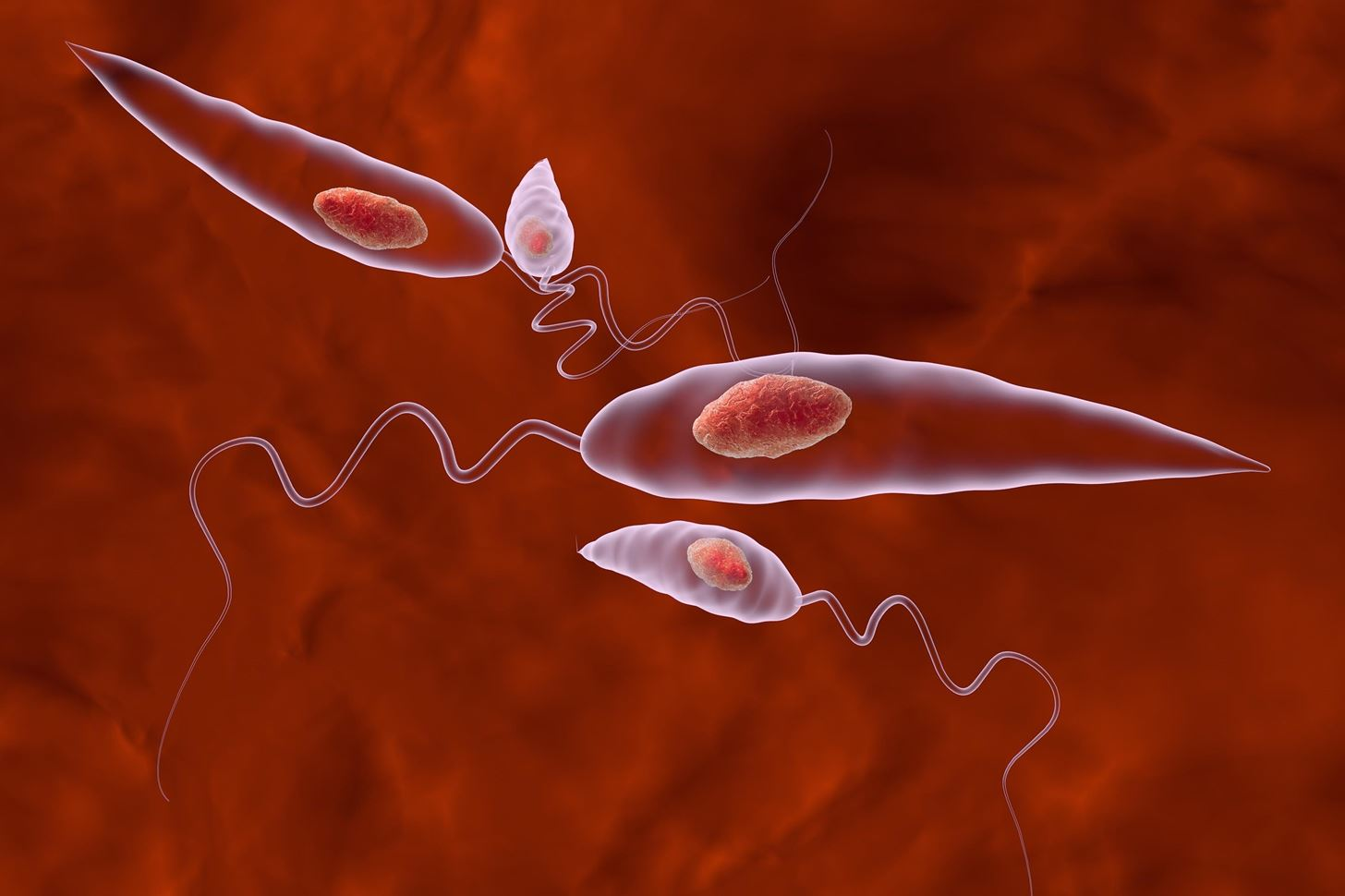 New Research Shows How Flesh-Eating Leishmania Parasites Hide in Our Bodies to Fight Future Infections