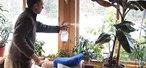 How to Mist houseplants
