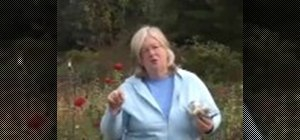 Care for garlic in a garden