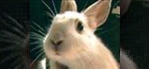 Take care of rabbits