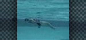 Swim the inverted breast stroke