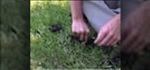 Get rid of moles in the yard