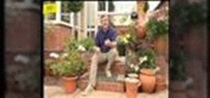Take care of terracotta pots