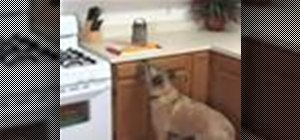 Keep your dog from counter surfing