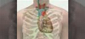 Perform a heart examination