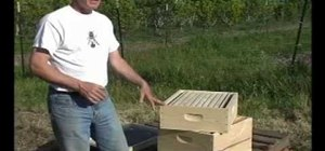 Set up a man-made beehive for honey bees